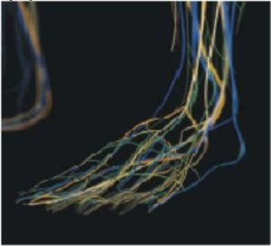 There are tiny blood vessels that run through the foot.